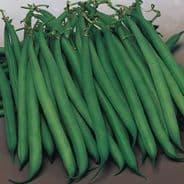Dwarf French bean Safari - 100 seeds