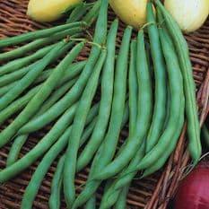 Dwarf French Bean Tendergreen 30 seeds / 120 seeds