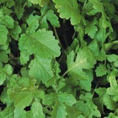 Green Manure - Mustard White Rivona 100 grammes