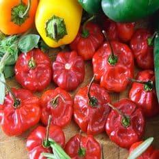 Hot Pepper - Scotch Bonnet Red  - 15 Seeds