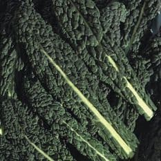 Kale - Black Tuscany (Nero di toscana) - 10 grams - 1 kg