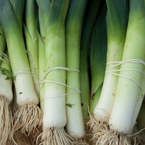 Leek Blue De Solaise Appx 600 seeds - 1200 seeds - Vegetable