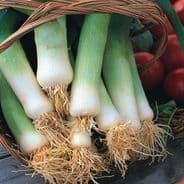 Leek Musselburgh appx 1,500 seeds