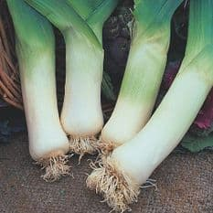 Leek Winter Giant 3 - 10 grams - Bulk Discounts available