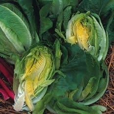 Lettuce Little Gem - Cos Type - 10 grams - Bulk Discounts Available