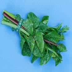 Malabar Spinach - Ceylon spinach - 30 seeds