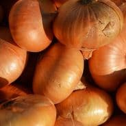 Onion Dutch Yellow - 10 Grams - Bulk Discounts available