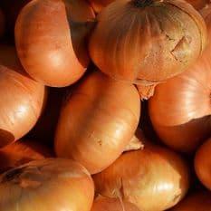 Onion Dutch Yellow - 10 Grams - Bulk Discounts available