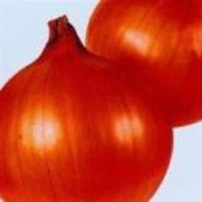Onion - F1 Sonic - Appx 100 seeds
