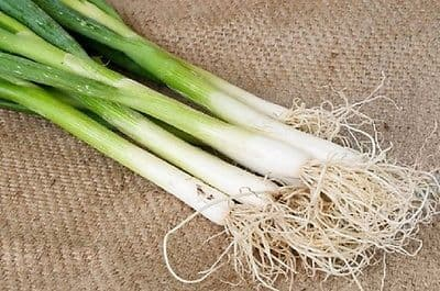 Onion Guardsman - Spring onion - Appx 600 seeds