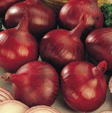 Onion Karmen - Red Onion 250 or 750 seeds