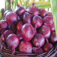 Onion North Holland Blood red Redmate - Appx 1000 seeds