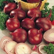 Onion 'Red Baron'  - 120 - 200 pelleted Seeds