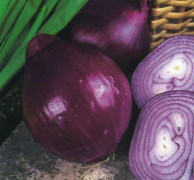 Onion Red Brunswick 200 seeds - 800 seeds