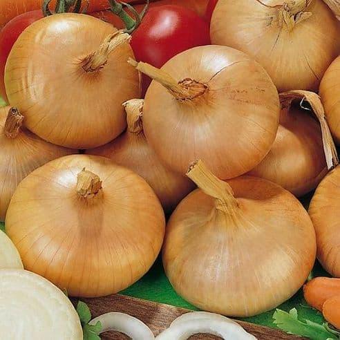 Onion Stuttgarter Giant - 1000 seeds