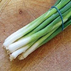Onion Tondo Musona - Spring / Bunching type - 25 grams - Bulk Discounts available