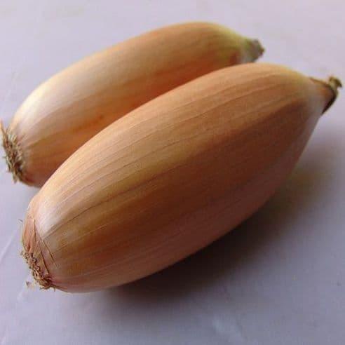 Onion Tosca - appx 300 seeds - 1 gram