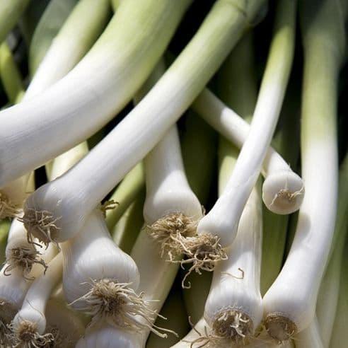 Onion Winter Over