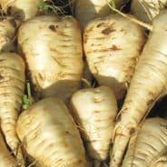 Parsnip Guernsey - Half Long - 50 grams - Bulk Discounts available