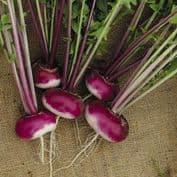 Parsnips / Turnips