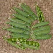 Pea Avola - 300 seeds - Vegetables