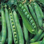Pea Hurst Greenshaft - Early maincrop