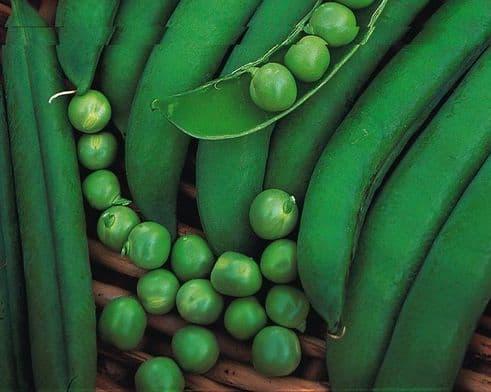 Pea premium - early type - 200 seeds