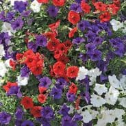 Petunia Express Mix - 50 Pelleted seeds