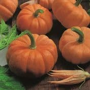 Pumpkin and Squashs