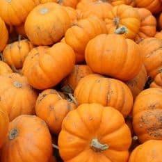 Pumpkin Baby Bear - 10 seeds