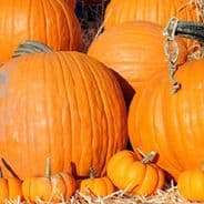 Pumpkin Mammoth Gold - 40 Seeds