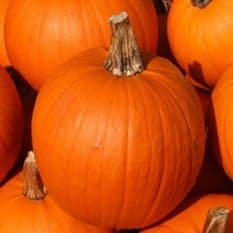 Pumpkin Small Sugar -30 seeds