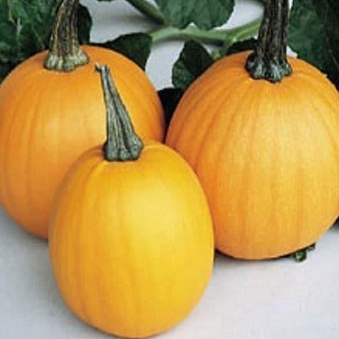 Pumpkin Spookie