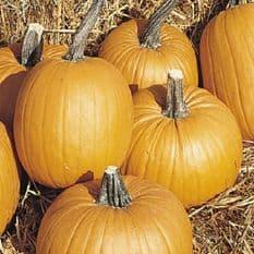 Pumpkin Tom Fox - 10 seeds