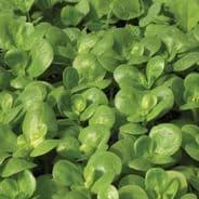 Purslane - Green 25 grams - 1 kg