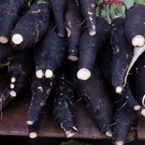 Radish Black Spanish Long Seeds
