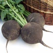 Radish Black Spanish Round 1200 Seeds