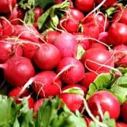 Radish Cherry Belle - Appx 1000 Seeds