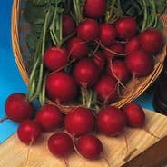 Radish Early Scarlet Globe Seeds