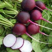 Radish Malaga Violet - 50 grams - Bulk Discounts Available