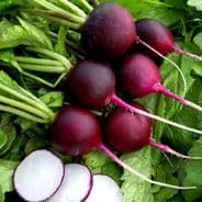 Radish Malaga Violet - Appx 150 Seeds