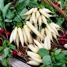 Radish Munchen Bier Seeds