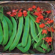 Runner Bean Lady Di - Early stringless - Appx 25 seeds