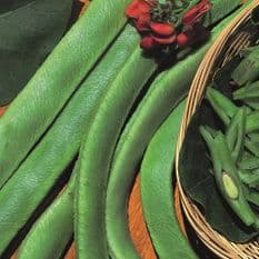 Runner Bean Scarlet Emperor - 30 Seeds