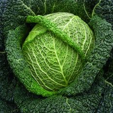 Savoy Cabbage Winter King appx 500 seeds