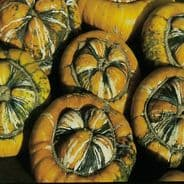 Squash Turks Turban - 25 grams - Bulk Discounts available