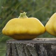 Summer Squash F1 Sunbeam 10 seeds