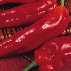Sweet Pepper Marconi Red Seeds 10 grams