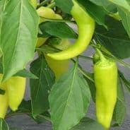 Sweet Pepper Sweet Banana - 100 seeds