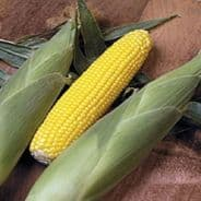 Sweetcorn F1 Golden Lion - Super Sweet Variety 32 Seeds